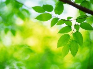 artificial-photosynthesis-1