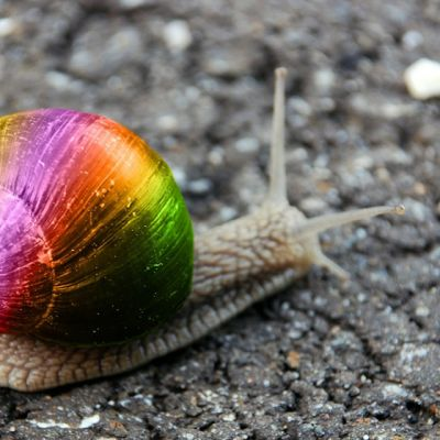 rainbow-snail-wallpaper-1024x640